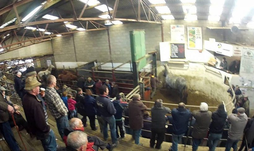 Drumshanbo Organic Mart  July Sale