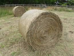 Organic hay & Silage for Sale
